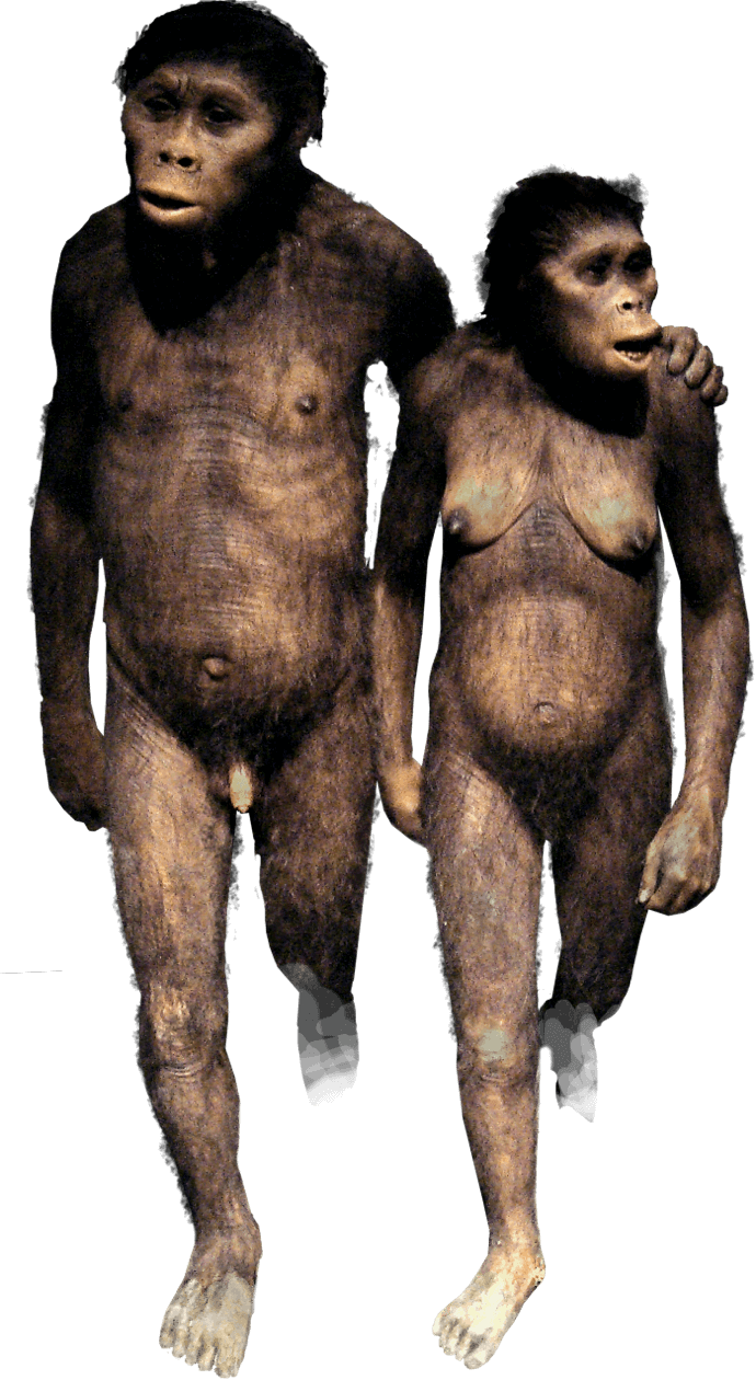 Australopithecus couple